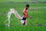 A farmer waters his rice field in the village Pobitora, India, February 29, 2012. (Anupam Nath  Associated Press)