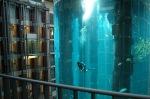 gigantskiy-akvarium-2