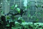 AquaDom - tropische Fische beziehen Aquarium