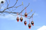 Painted Easter eggs hanging on a tree in Adlesici, Slovenia. (© Srdjan Zivulovic Reuters)