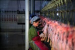 The worker cut up carcasses of ducks in poultry «Dudan», which produces 7,000 tonnes of duck per year, in Pyongyang, North Korea, April 12, 2012. (Ng Han Guan Associated Press)