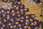 Στεγνωμα  χαλών  φρεσκοβαμμένα στην ινδική πόλη Τζαϊπούρ.