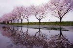 Spring rain - Koudzi Tomihise.