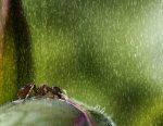 SUMMER RAIN John Colbensen