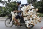 Ένας άντρας φέρνει στην αγορά πάπιες στην επαρχία Χα Ναμ, Βιετνάμ. (Kham Reuters)
