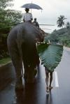 00163_01..Sri Lanka, 1995