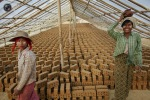 Women work on the brick factory on the outskirts of Yangon. (DAMIR SAGOLJ REUTERS)