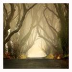 The Dark Hedges - Northern Ireland