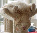 CAT (14)