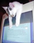 CAT (16)