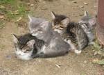 CAT (7)
