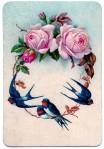 bird roses frame