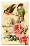 birdsroses