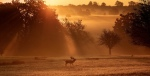 Dawn by Mark Bridger