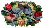 doves flowers