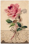 lace-rose-