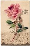 lace-rose-