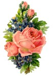 rosesViolets-