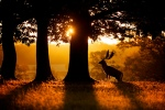 sunrise by Mark Bridger