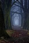 mystical-forest-slovakia