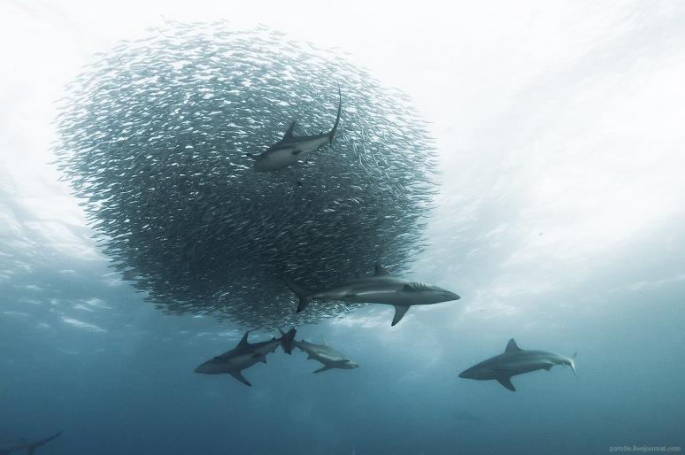 sardine wars ep. IV