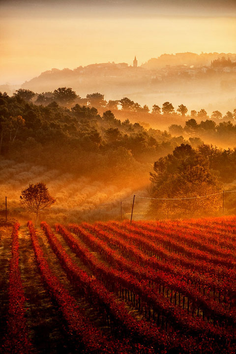 Vineyards, Umbria, Tuscany, Italy