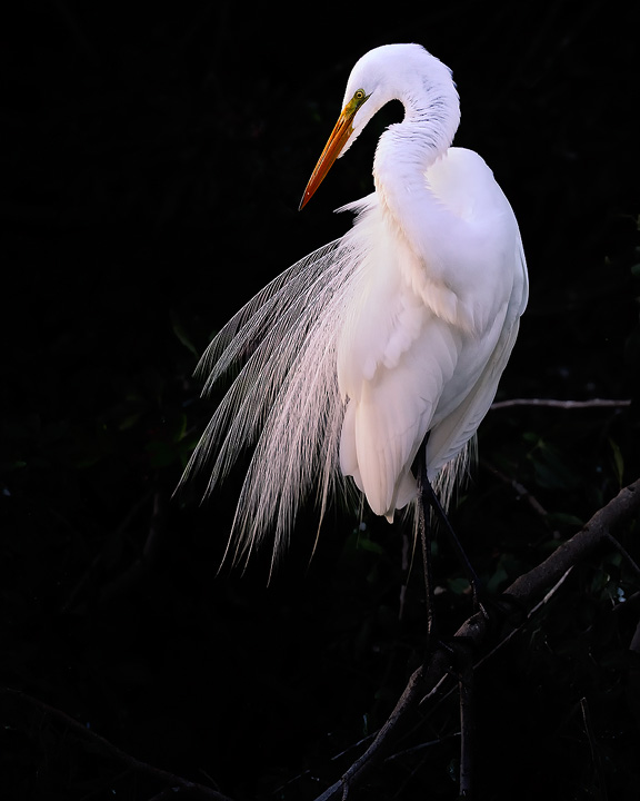 egret-copy