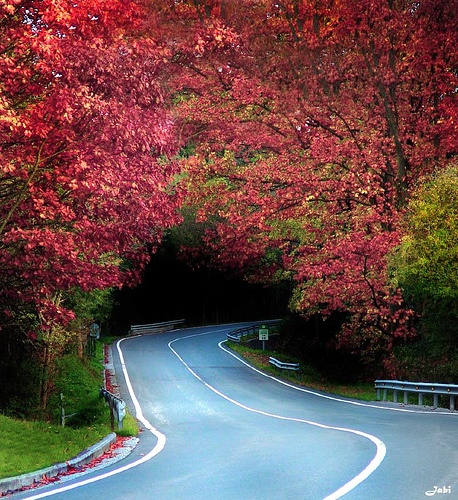 Tree Tunnel, Biscay, Spain